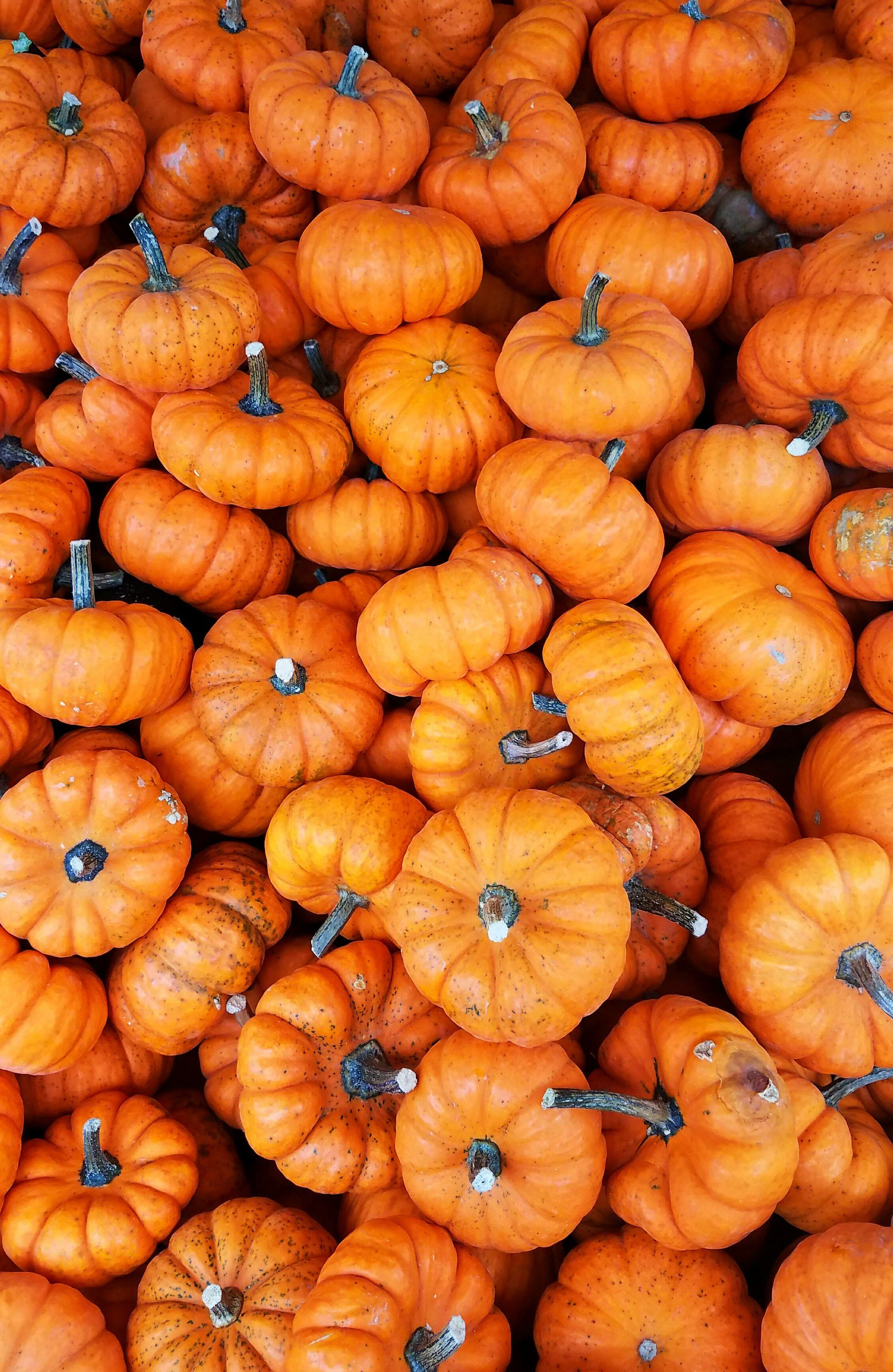 5 Stock Photo Images of Pumpkins and Gourds with Vibrant Color Variations #autumncolours