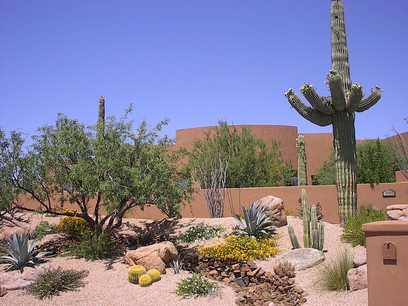 Desert Landscape Design Ideas photo of an expansive southwestern backyard landscape in phoenix with a water feature Desert Landscaping Ideas With Artificial Turf Desert Showcase Landscaping Is Dedicated To Tamis New House Pinterest Artificial Turf Landscaping And