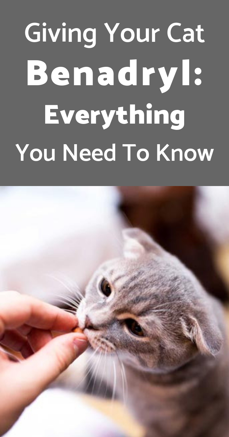 Giving Your Cat Benadryl Everything You Need To Know Benadryl For Cats Cat Allergies Sick Cat