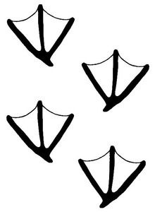 duck track decal md27 waterfowl hunting stickers cricut rh pinterest com Rabbit Tracks Clip Art Rabbit Tracks Clip Art