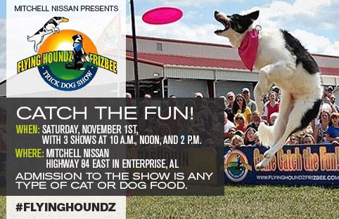 Mitchell Nissan Enterprise Al >> Catch The Fun On Saturday November 1 2014 At Mitchell Nissan In