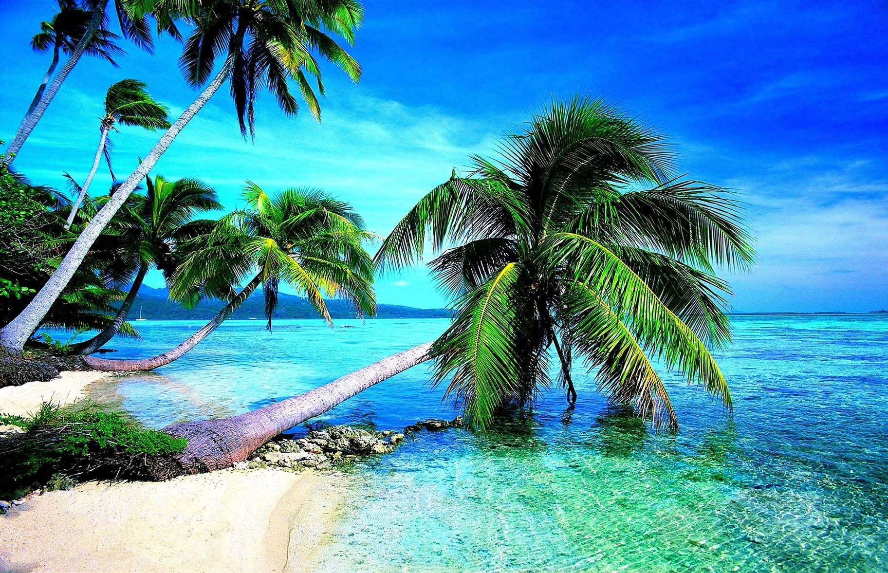 Trees On Beach Most Attractive Wallpapers Hd 4k Pemandangan Di Pantai Pantai