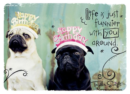 Happy Birthday Pug Happy Birthday Ecard Happy Birthday Pug