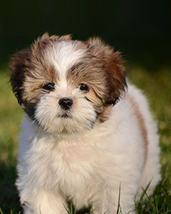 20 Breeds Of Small Dogs That Are So Good With Children Pets And