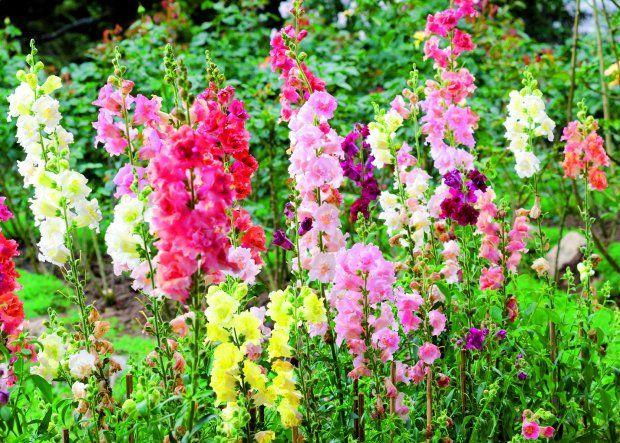 Rosliny Kwitnace W Lipcu Flowers Plants Garden