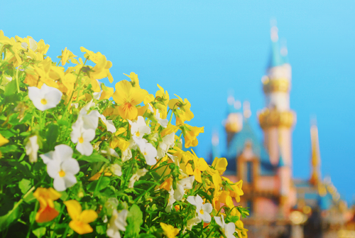 Disney Days(: