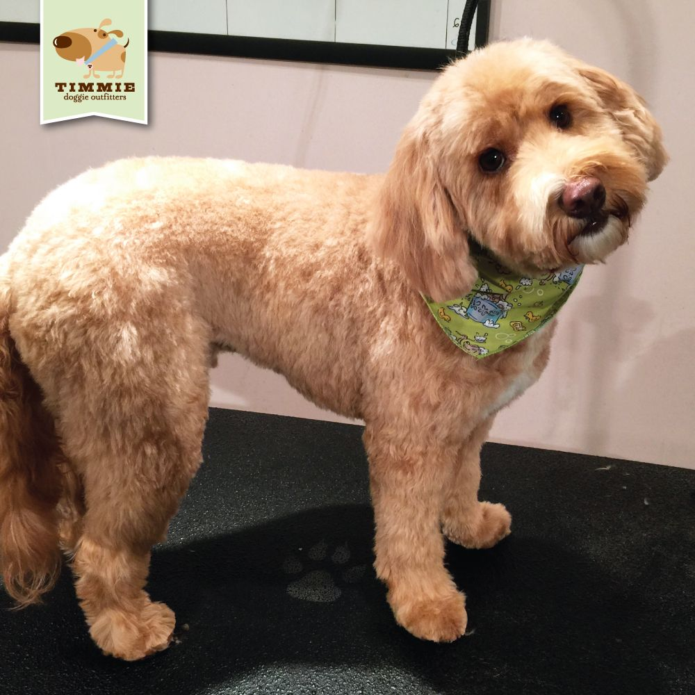Dunkel's new do so fresh and so clean
