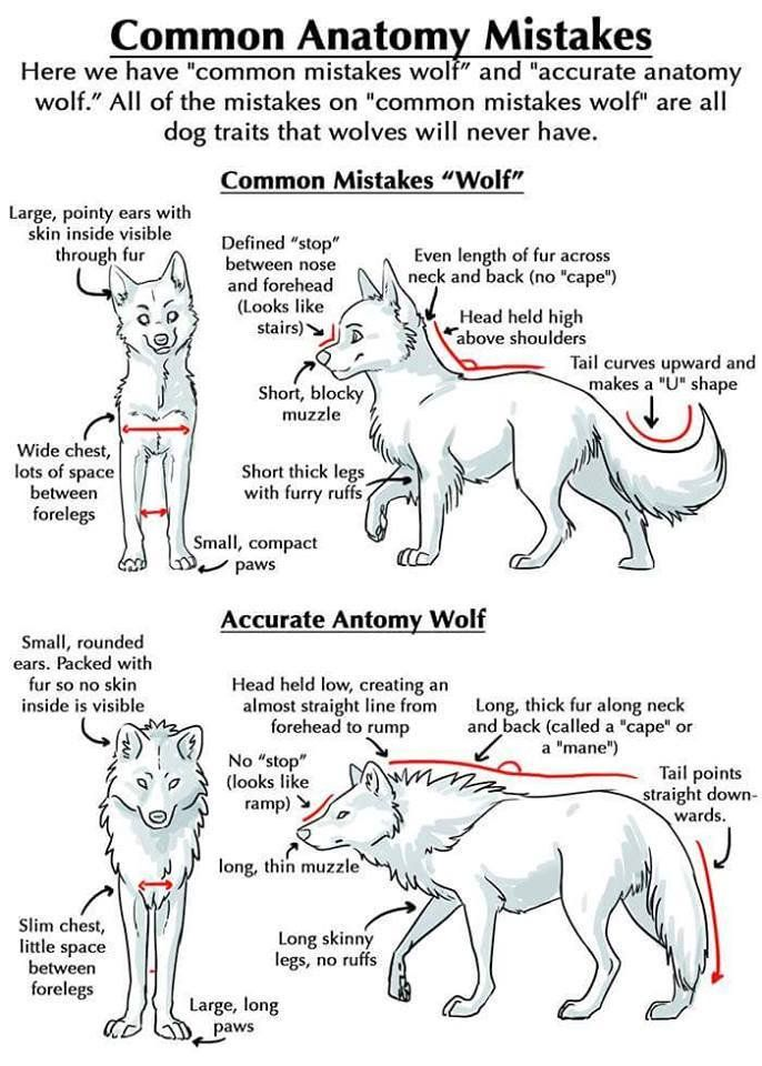 My Pack Of Wolves Mypackofwolves Twitter Drawing Tips