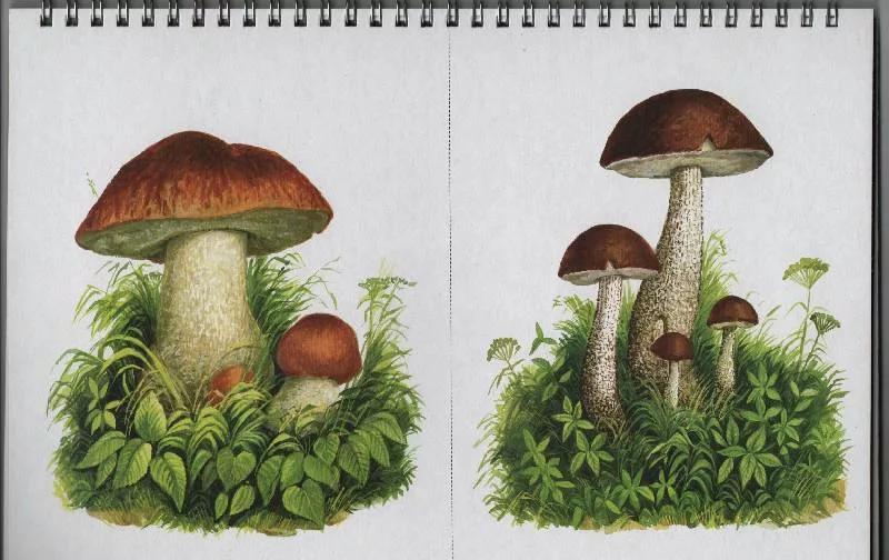 один разрезные картинки гриб ещё открытыми