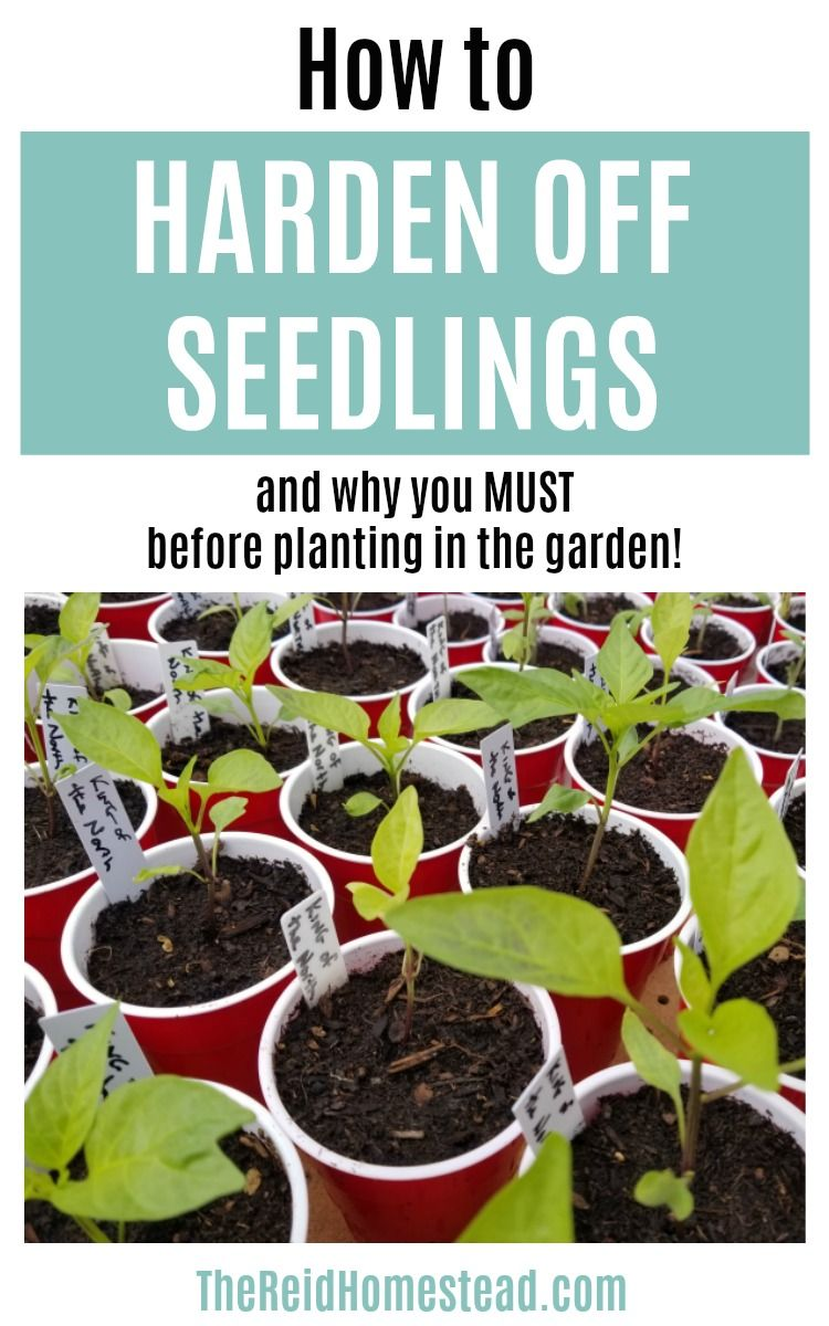 How To Harden Off Your Seedlings A Must Do Step Before Planting