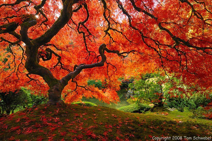 Beautiful...Japanese Garden in Portland