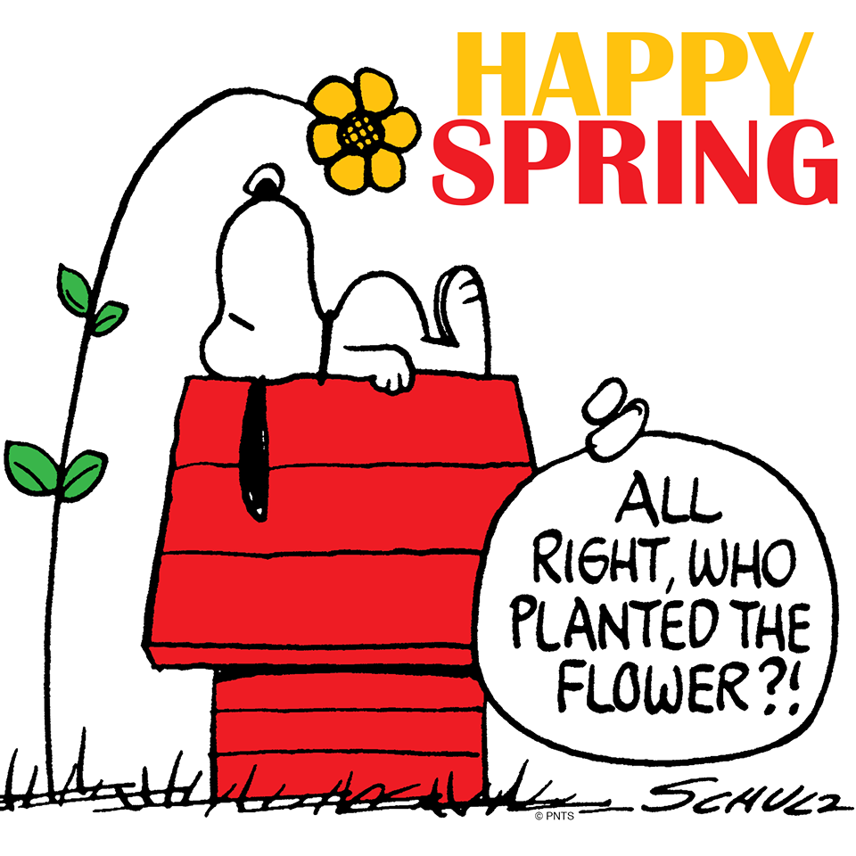 Happy spring charlie brown and the gang pinterest