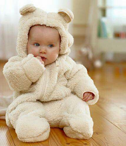 Bear cub baby