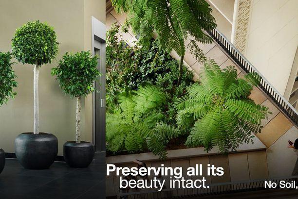 Top Indoor Plants Suppliers In Uae Best Indoor Plants 400 x 300