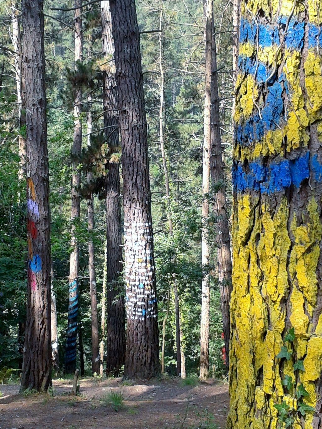 Bosque pintado. Oma. A. Ibarrola.