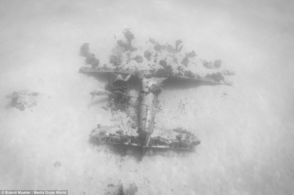 Stunning pictures reveal hundreds of World War Two aircraft ...