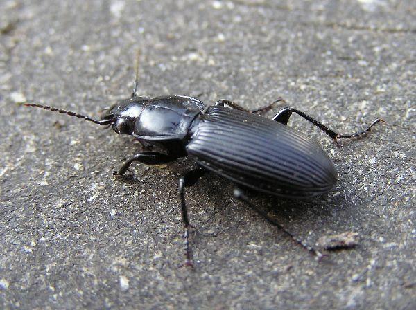 Pin On Black Is Beautiful 1