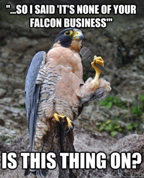 That S So Falcon Funny For The Best Daily Humor Jokes Visit Www Bestfunnyjokes4u Com Lol Funny Cat Pic Funny Birds Animal Captions Funny Captions