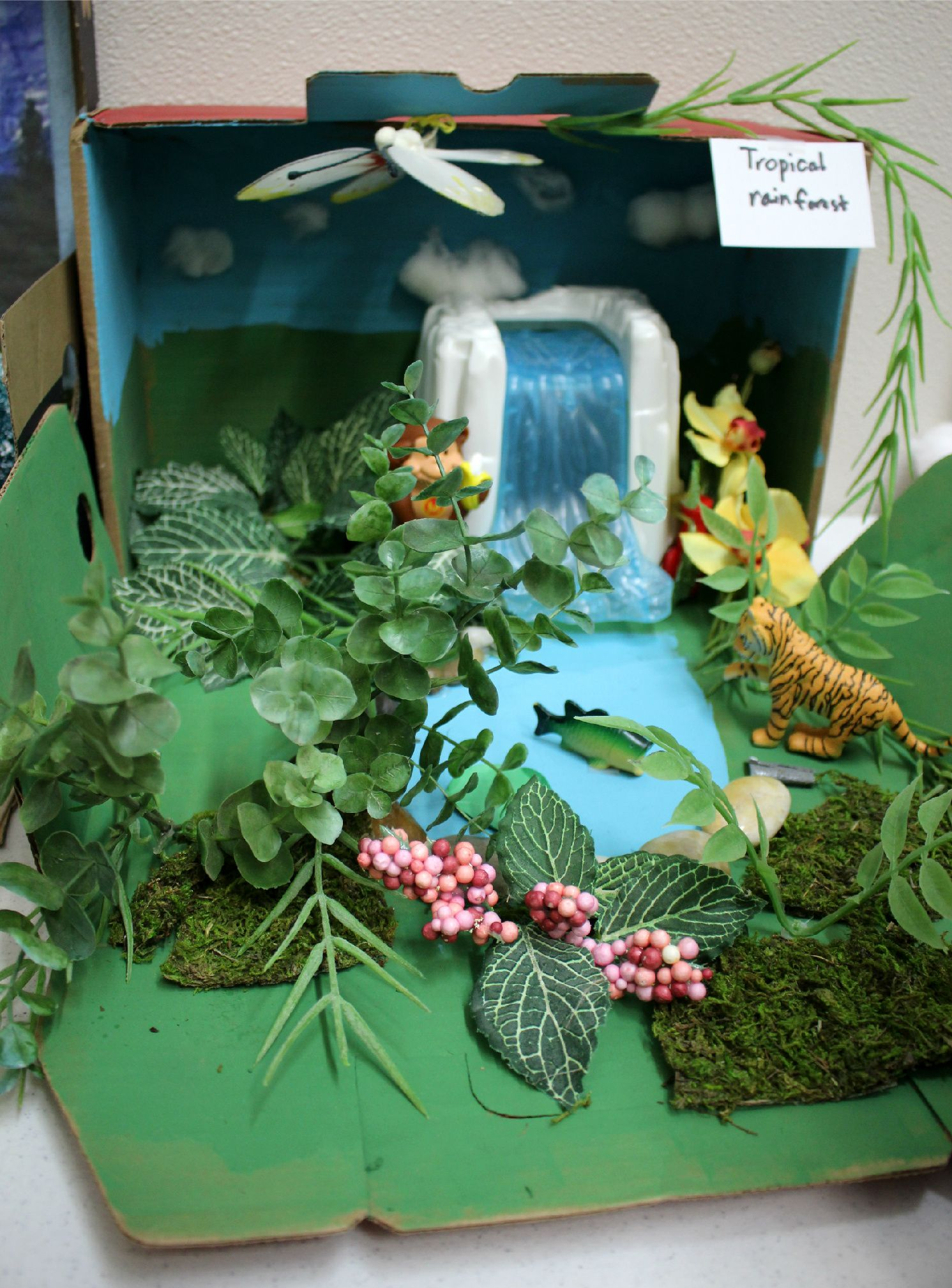 This Is A Fourth Grade Biome Project Representing The