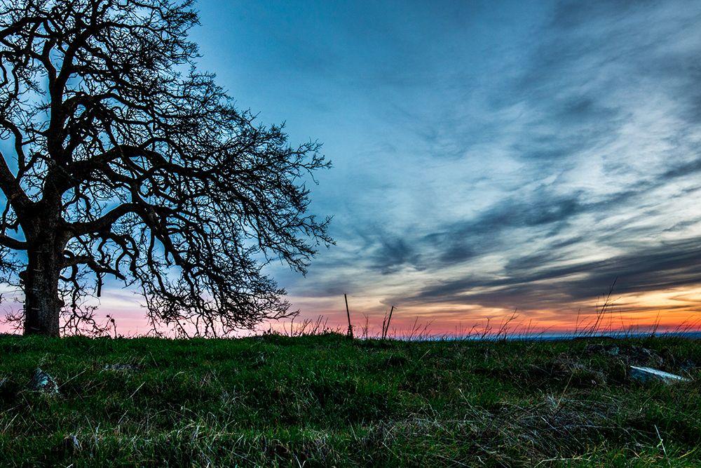 Brenan Greene Photography El Dorado Hills Ca El Dorado County Forest Living California El Dorado County Photography Business Photography