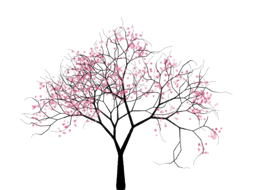 Cherry Trees Is An Algorithmic Animation Of A Cherry Tree Drawn In A Pen Drawing Style Tree Drawing Cherry Blossom Tree Blossom Trees