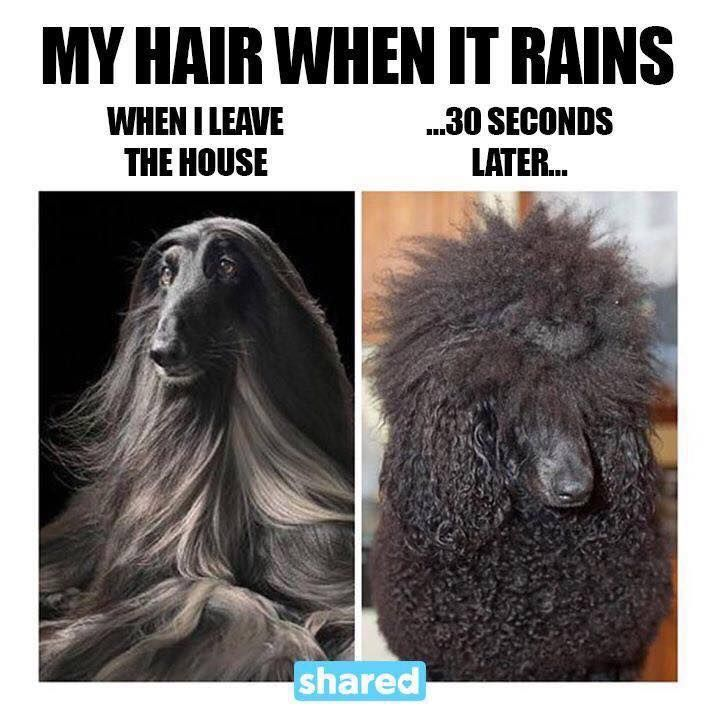 Funny Rainy Day: Funny Pictures, Hair