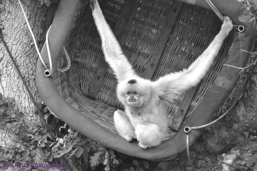 kim wall photography on monkey world animals primates on kim wall id=20868