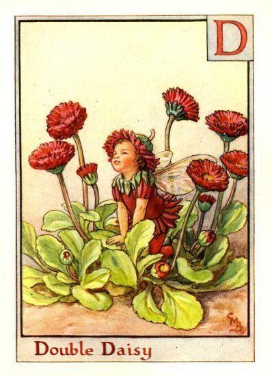 The Double Daisy Fairy Cicely Mary Barker Flower Fairies Books Flower Fairies Fairy Art