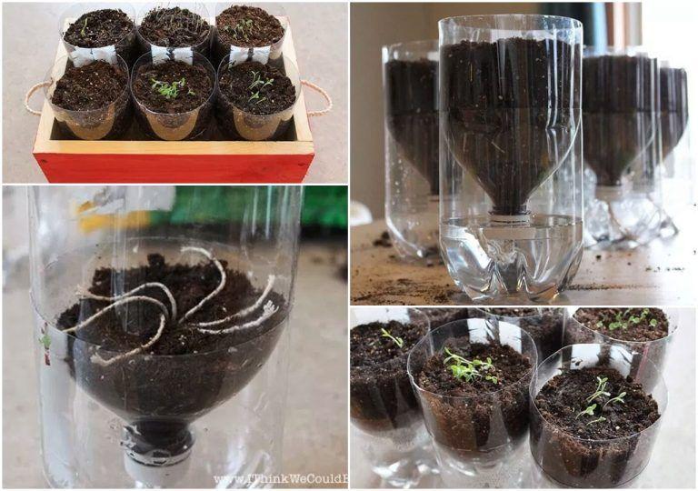 3 Sposoby Na Samo Podlewanie Kwiatow Gdy Jestesmy Na Urlopie Dompelenpomyslow Pl Plants Decor Terrarium