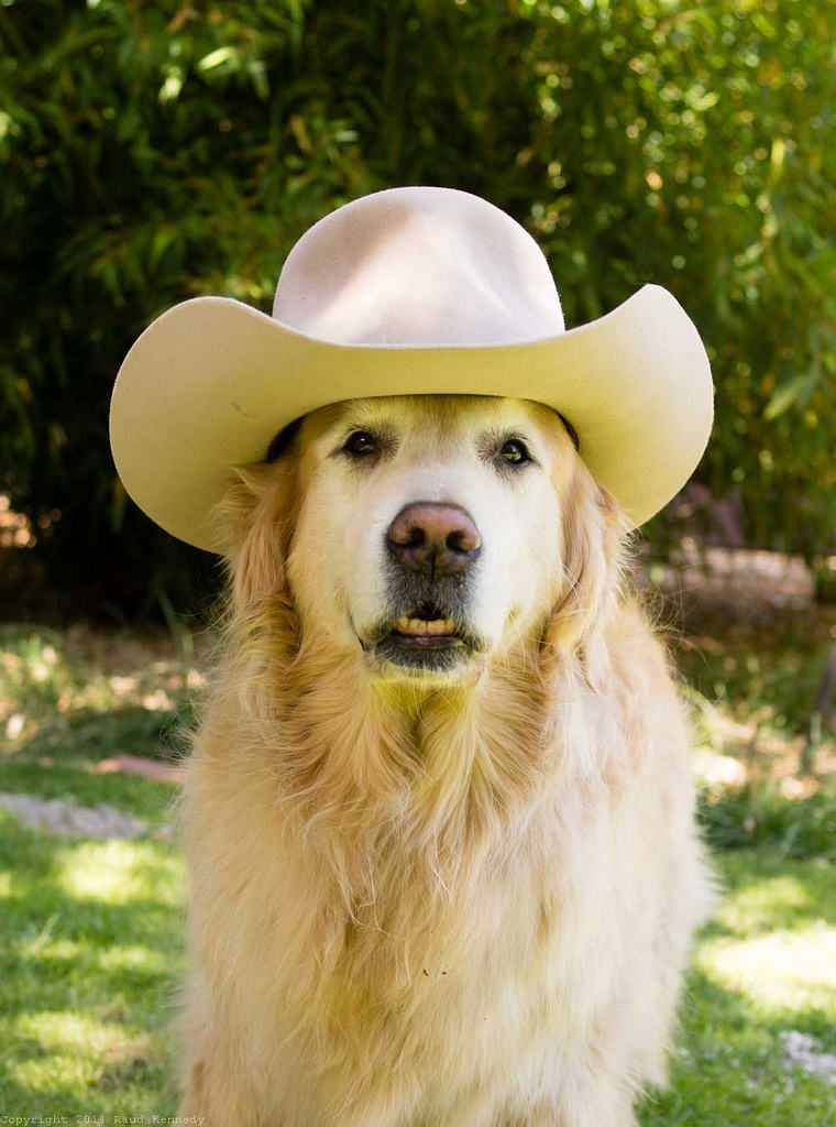 Sadie In Hat Dogs Puppy Dress Hats