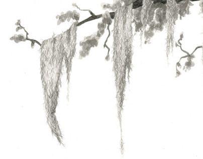Pin By Kelli Knigge On Drawings Spanish Moss Drawings Tree Drawing