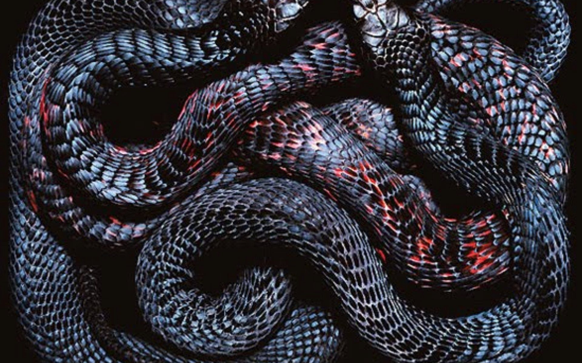 Undefined Black Snake Wallpapers 43