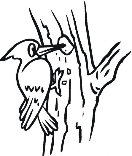 Woodpecker Coloring Sheet Coloring Pages Bird Theme Woodpecker