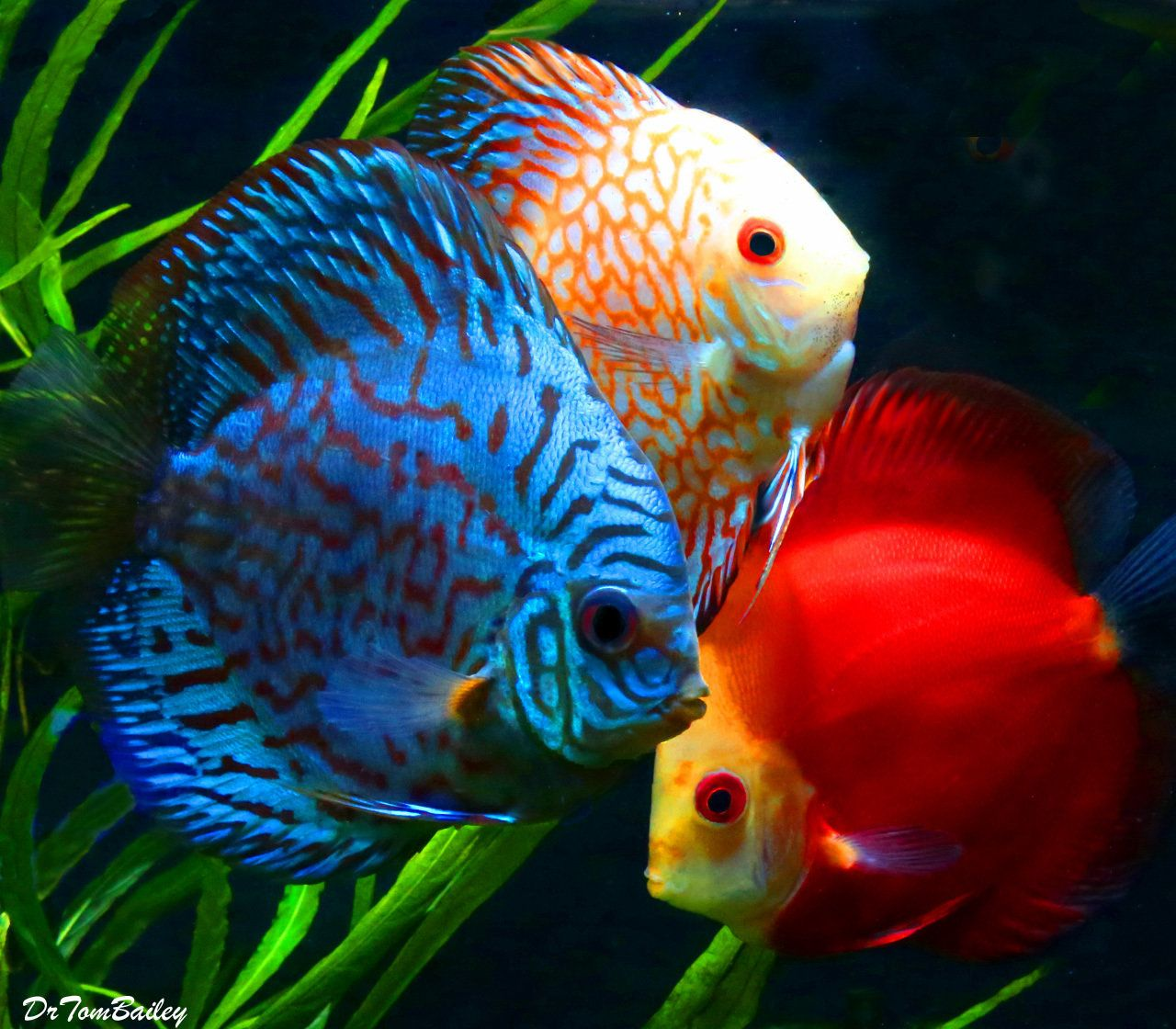 Pin On Fish Wishlist