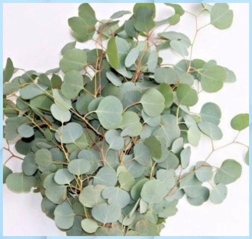 Eukalyptus Silberdollar Frisch Getrocknet Konservi Badezimmer Deko Ideen Eukalyptus Frisch Getrocknet Kons In 2020 Sukkulenten Pflanzen Pflanzen Sukkulenten