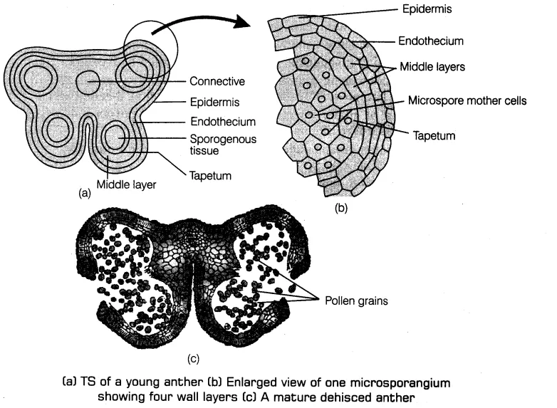 Pin on Class 12 Biology Notes
