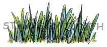 H-198 Scribble Grass