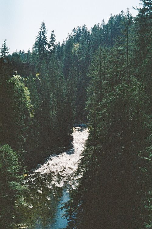 #river #trees #nature