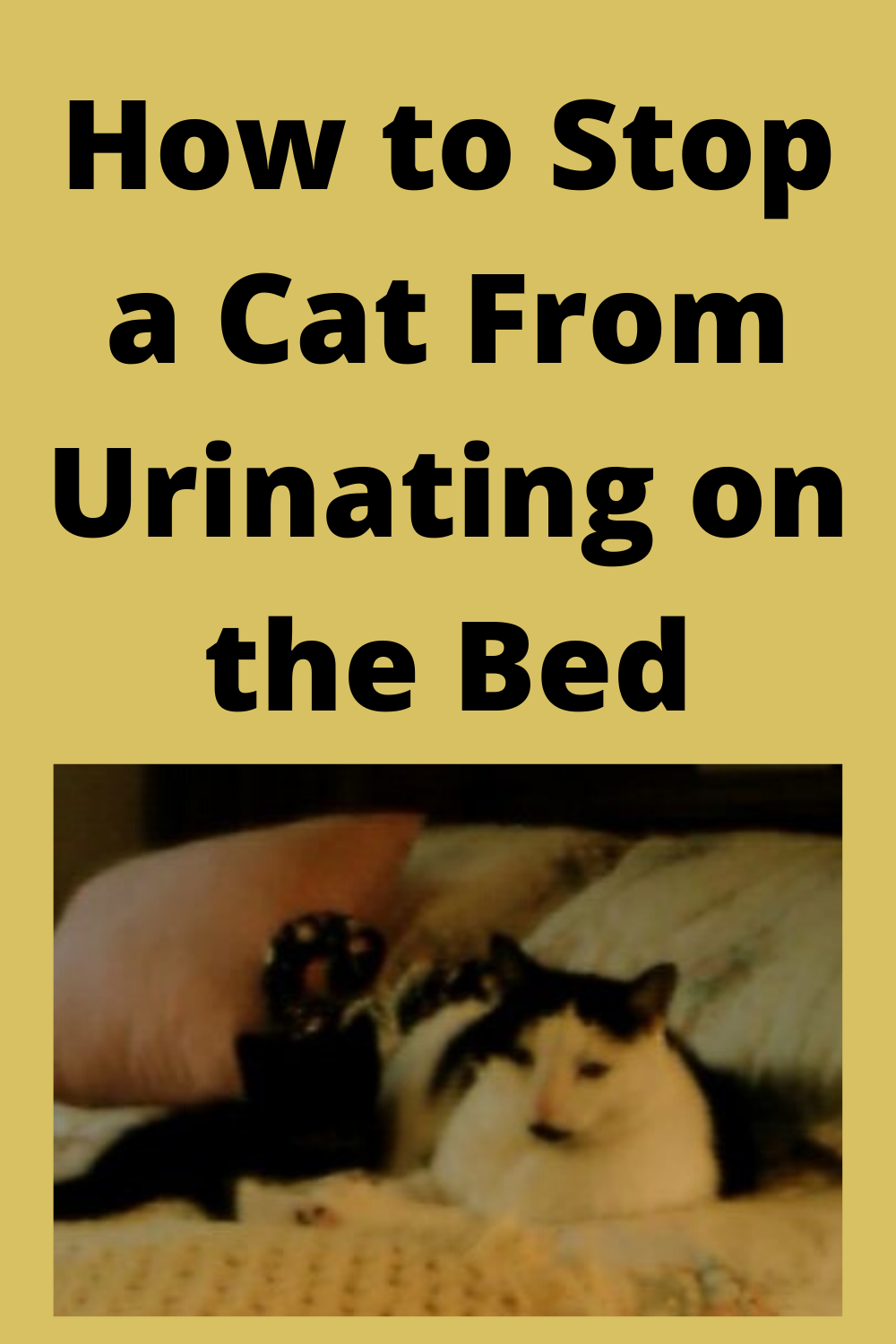 How to Stop a Cat From Urinating on the Bed in 2020 Cat