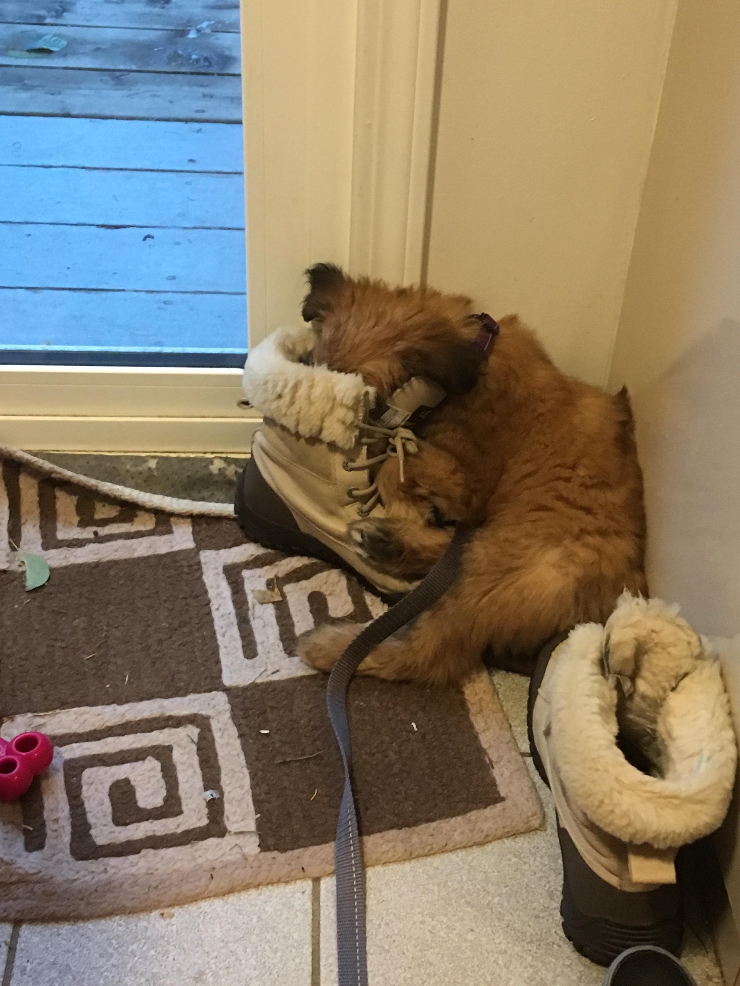 Pin by tristarcraze on good pals pinterest puppies new puppy