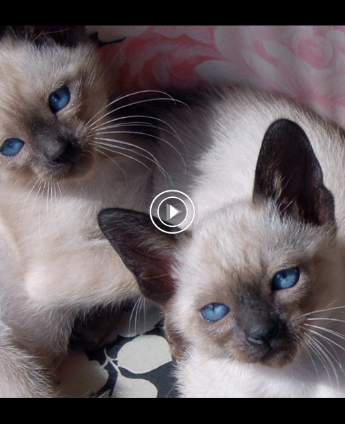 Kittens meowing (too much cuteness) All talking at the