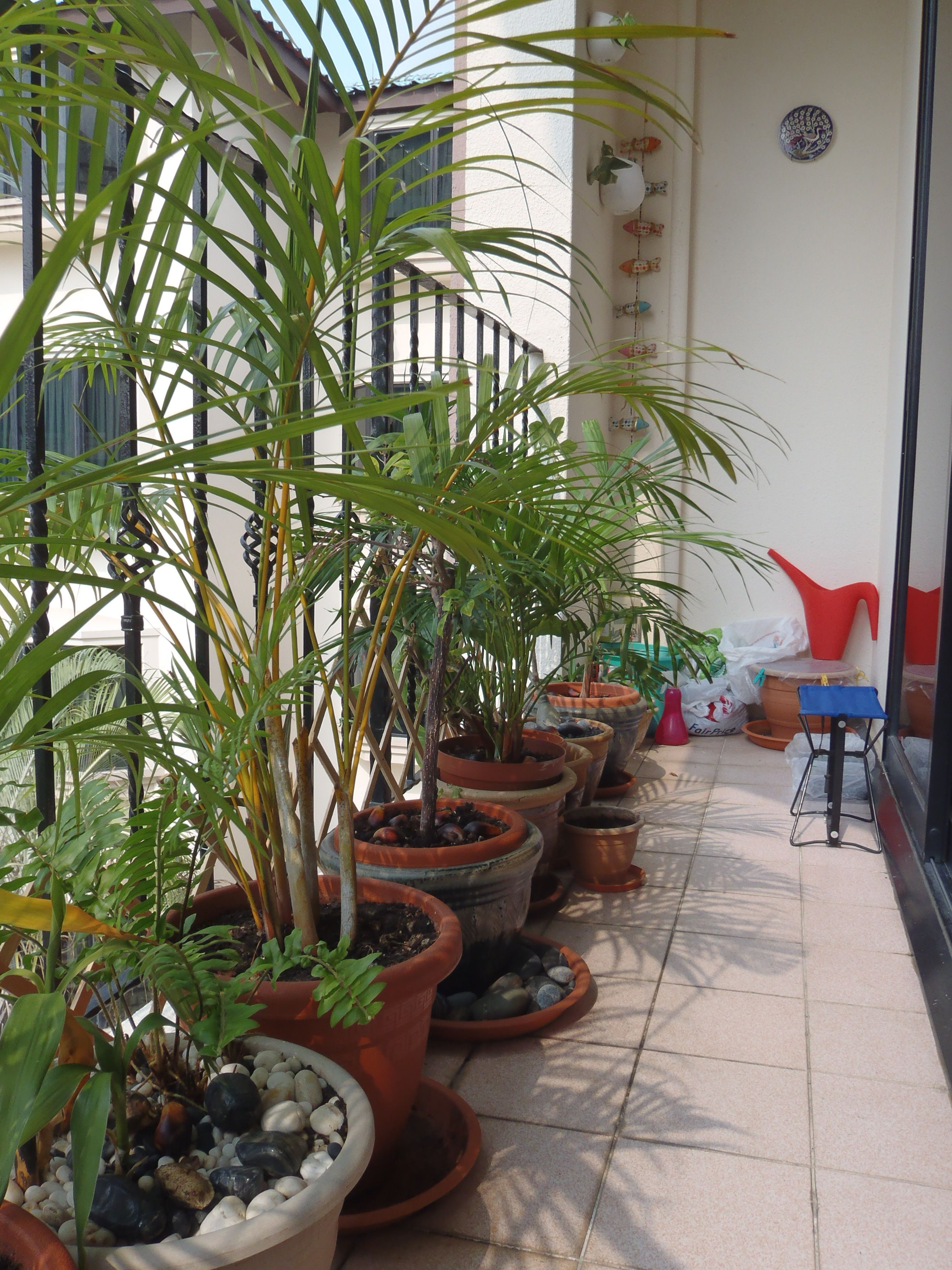 create a  u0026quot privacy screen u0026quot  with rows of leafy tall plants