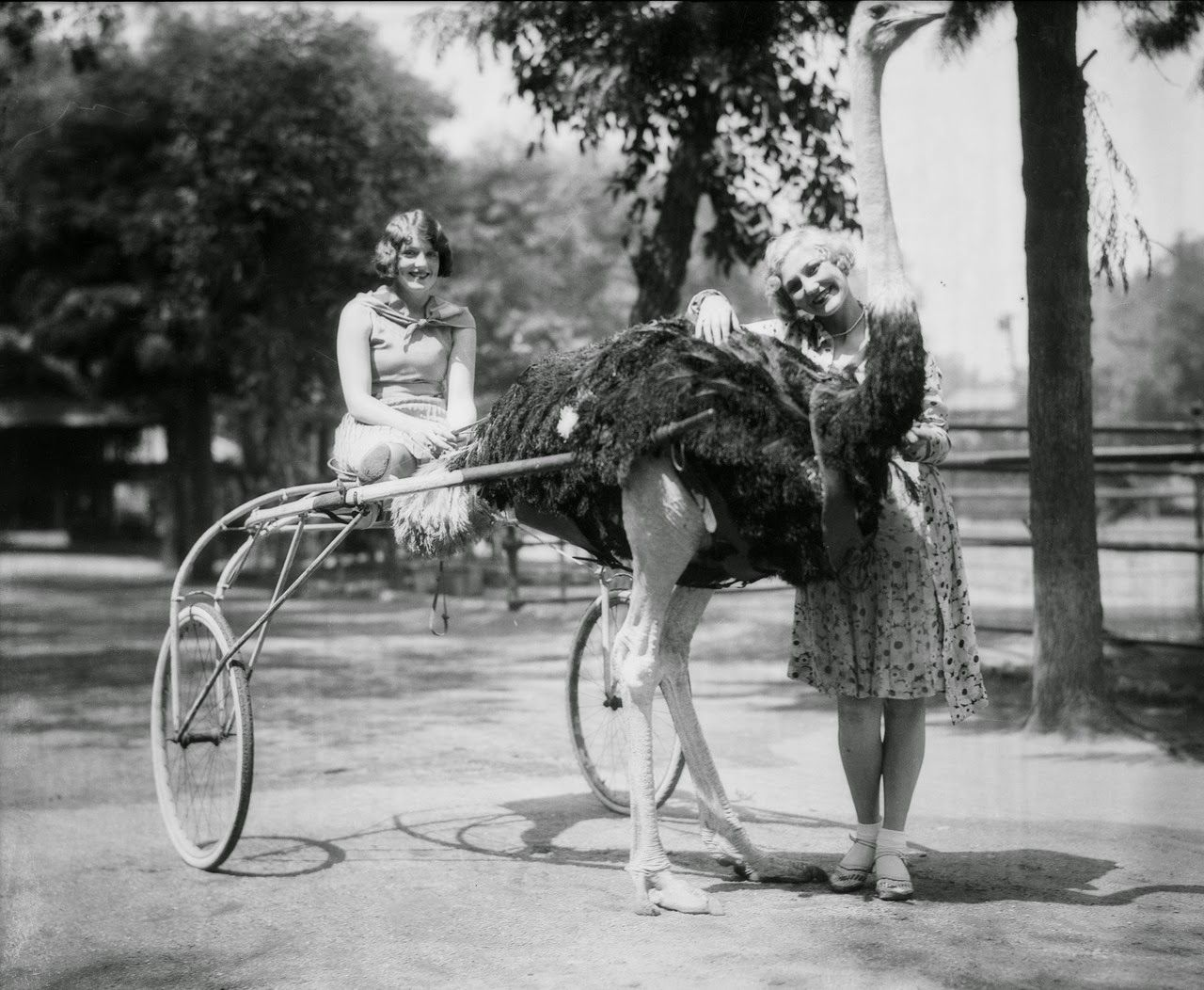 Before Disneyland, There were Ostrich Farms
