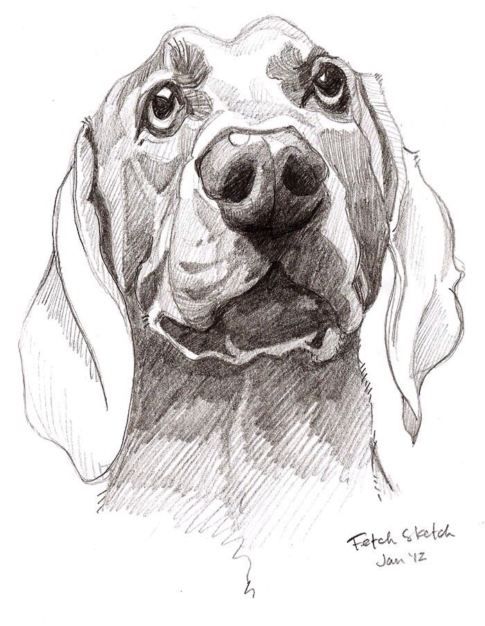 Dog pencil sketch
