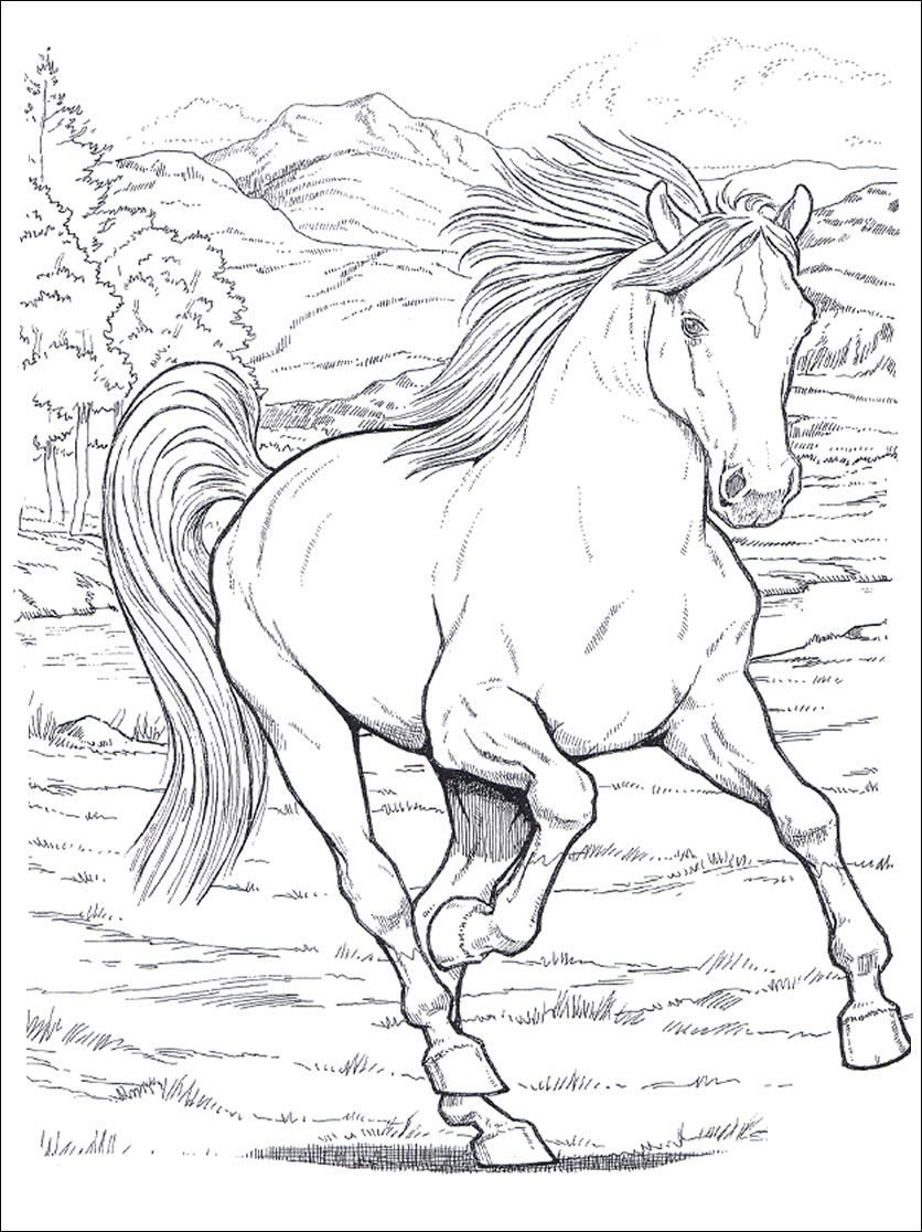 horses_2 Adult coloring pages | Coloring pages | Pinterest | Adult ...