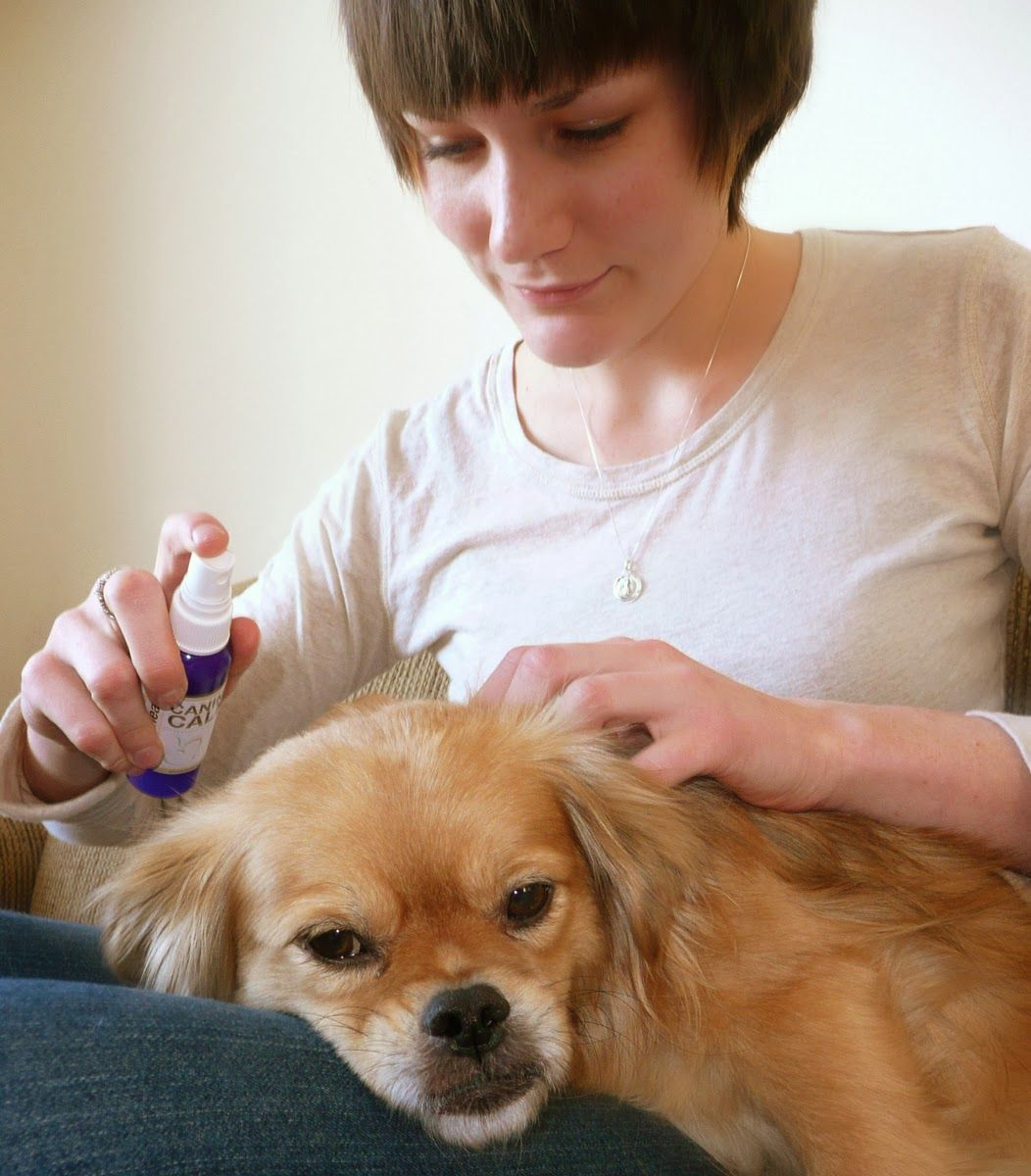 How aromatherapy can help calm your dog aromatherapy