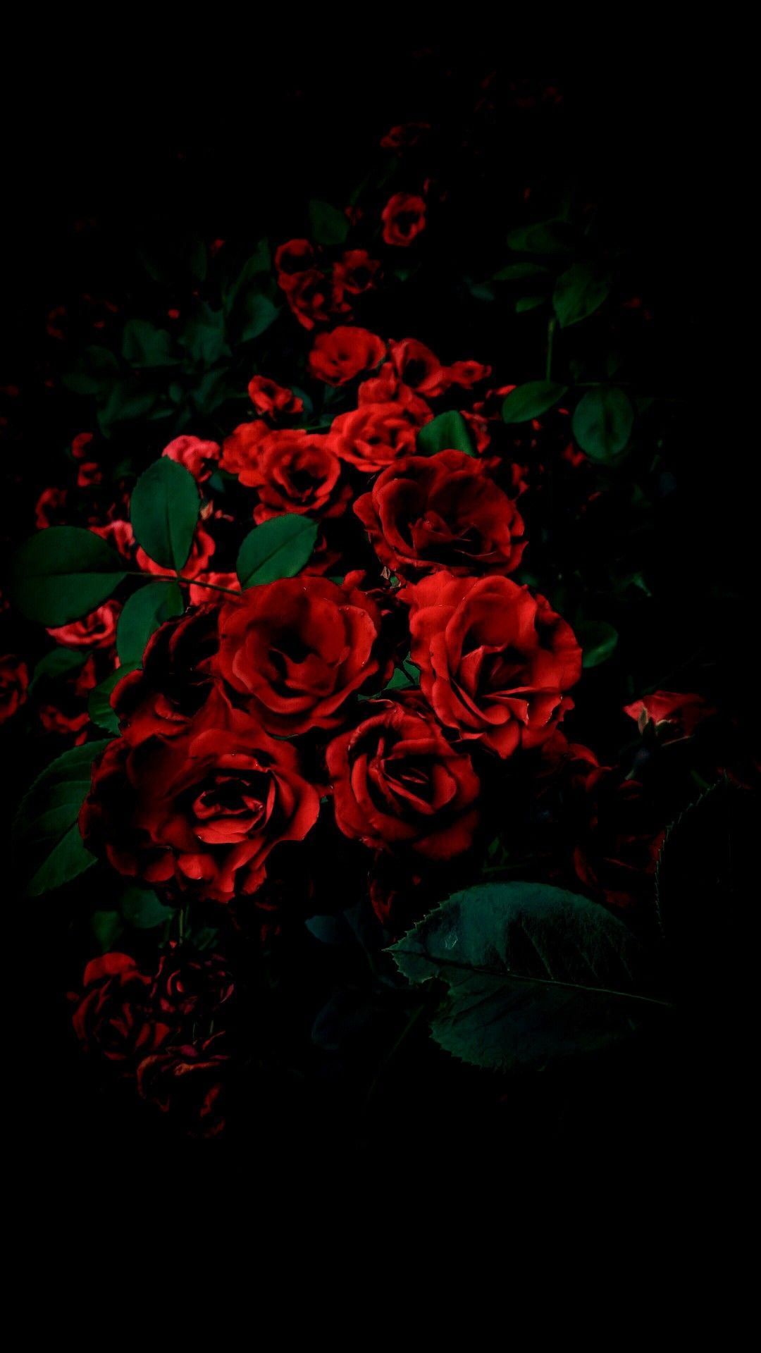Pin By Phayao Lem On Macro Photography Flowers Black Background Red Roses Wallpaper Rose Background