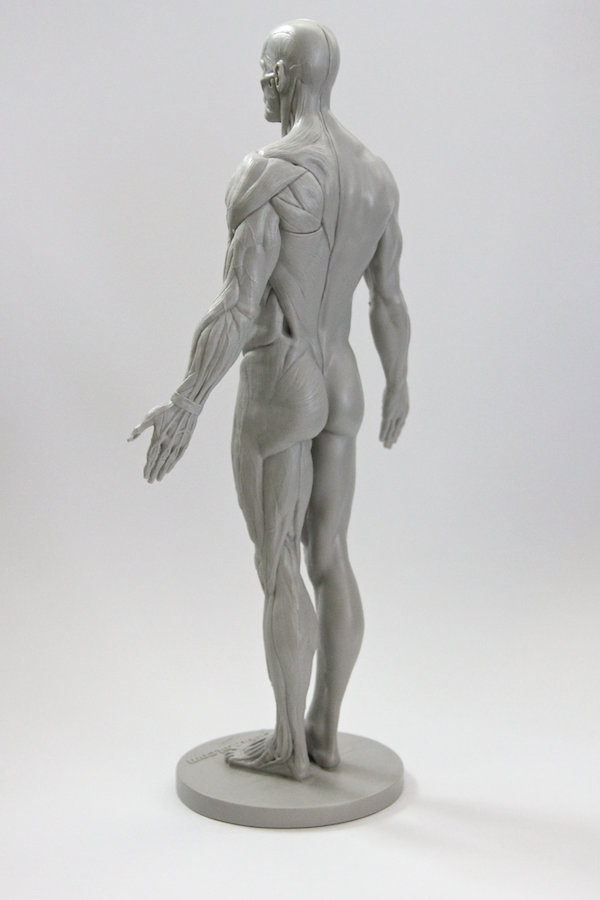 Httpscgcookieblender20131114review 3d Total Male Anatomy