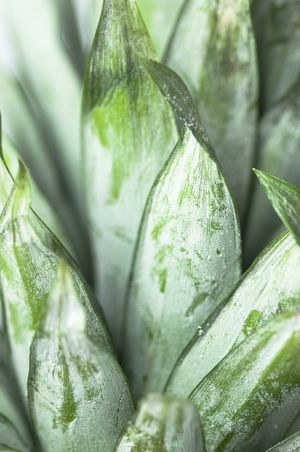 Pineapple - food photography photo by Cornelia Kahr