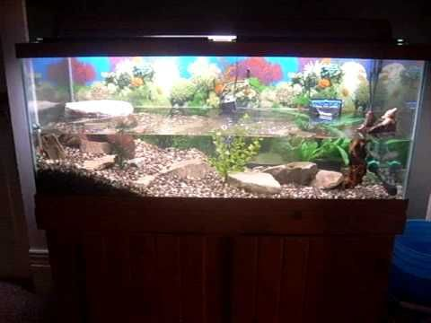 75 Gallon Turtle Tank Set Up Homemade Basking Deck Turtle Tank Turtle Habitat Fish Tank